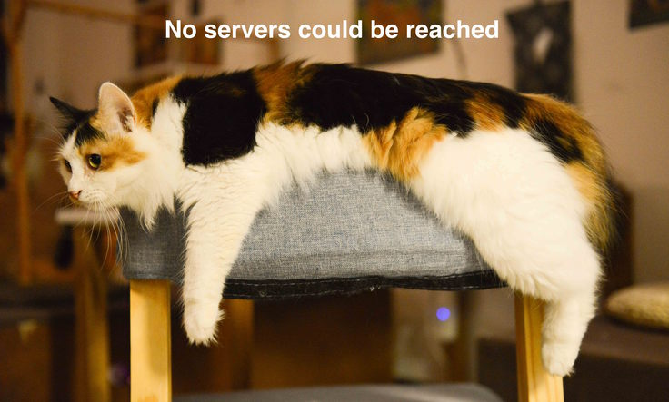 Cat trying (not very hard) to reach a nameserver